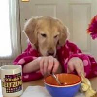 dog-video